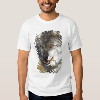 Wolf (Canis Lupus) T Shirt
