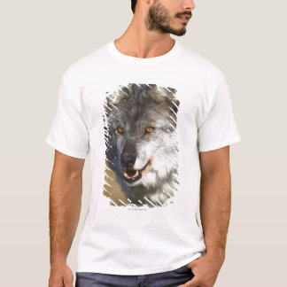Wolf (Canis Lupus) T-Shirt