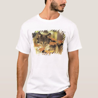 Wolf (Canis lupus) with autumn color, Canada T-Shirt