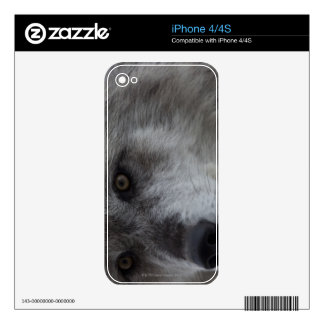 Wolf (Canus lupus) from Yellowstone National Decals For The iPhone 4