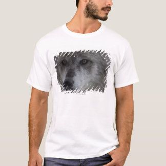 Wolf (Canus lupus) from Yellowstone National T-Shirt