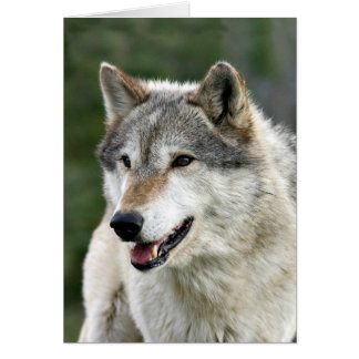 Wolf Cards