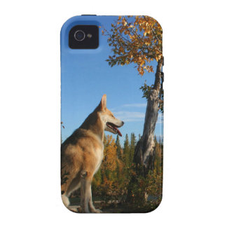 wolf Case-Mate iPhone 4 covers
