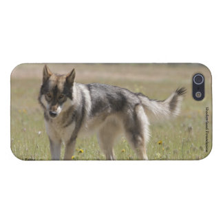 Wolf Case Savvy iPhone 5 Glossy Finish Case