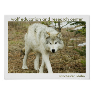 Wolf Center Poster