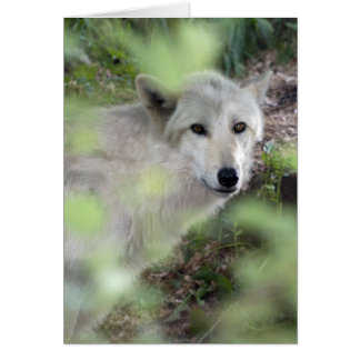 Wolf Charm Greeting Cards
