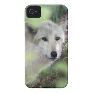 Wolf Charm iPhone 4 Cases