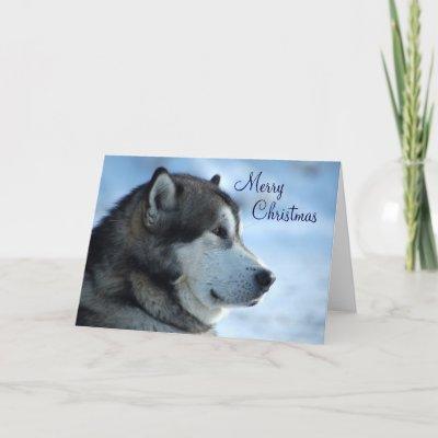 Christmas wolf christmas wolf
