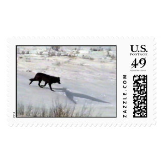 wolf-co stamp