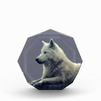 Wolf contemplation award