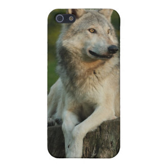 Wolf Cover For iPhone SE/5/5s