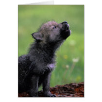 Wolf Cub Howling Missing You Card