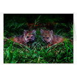 Wolf Cubs Greeting Card
