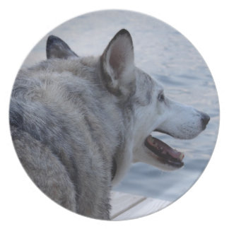 Wolf Dog at Cayuga Lake NY Party Plates