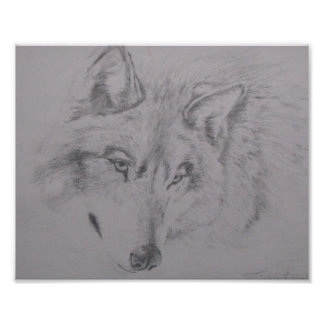 Wolf drawing by Lucinda Knowlton Photo Print
