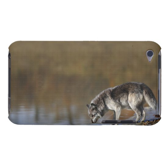 Wolf Drinking Water From A Pond iPod Case-Mate Case
