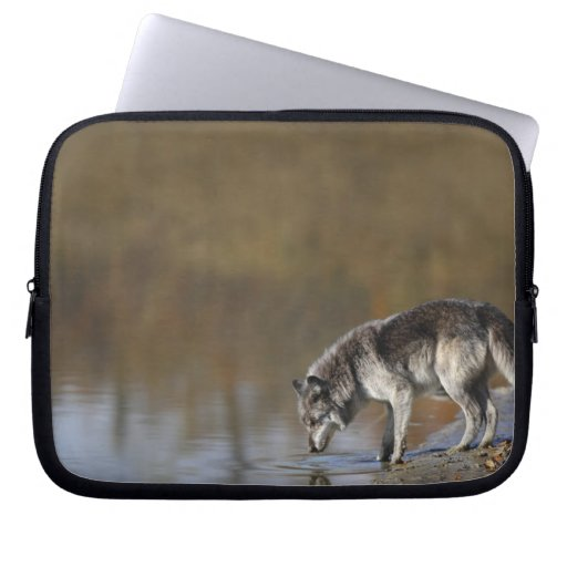 Wolf Drinking Water From A Pond Laptop Sleeve