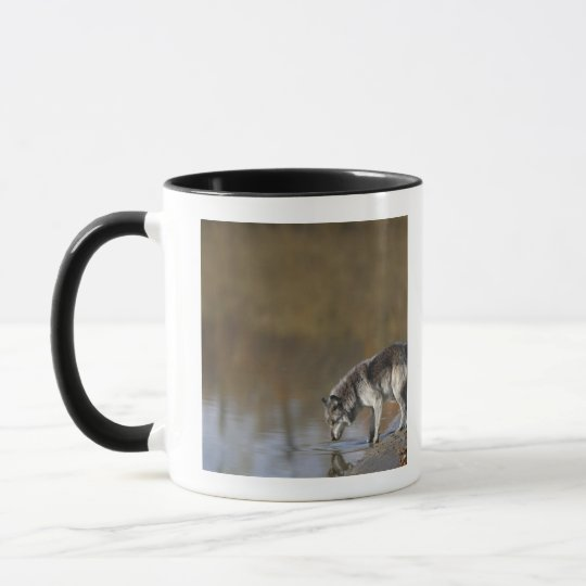 Wolf Drinking Water From A Pond Mug