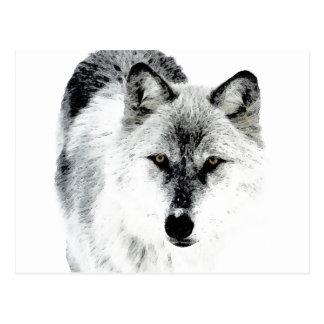 Wolf Eyes Postcard