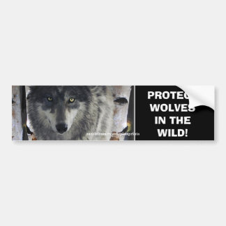 WOLF EYES Wildlife Conservation Bumper sticker Car Bumper Sticker