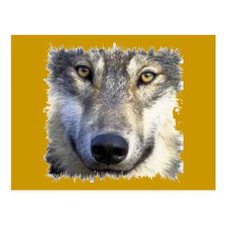 Wolf face close up postcard