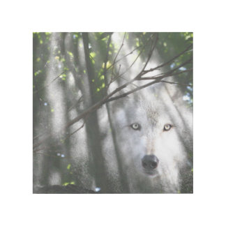 Wolf face in a sunbeam gallery wrap