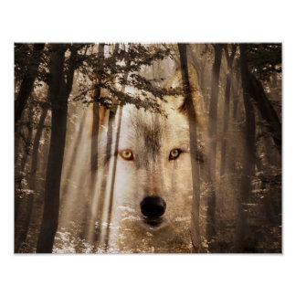Wolf face in the woods poster