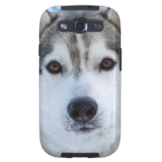 wolf face photo samsung galaxy S3 case Galaxy S3 Cover
