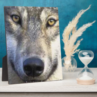 "Wolf face  Plaque  8x10"""