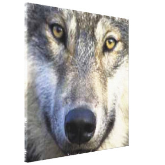 """Wolf face Wrapped Canvas 24x24"""""""