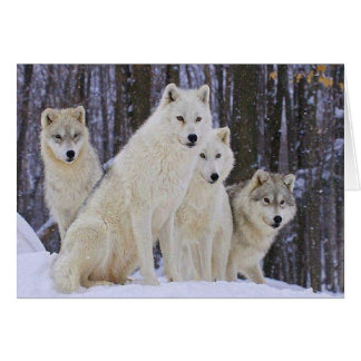 Wolf Family Card