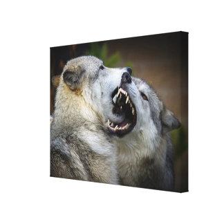 Wolf Fight Canvas Print
