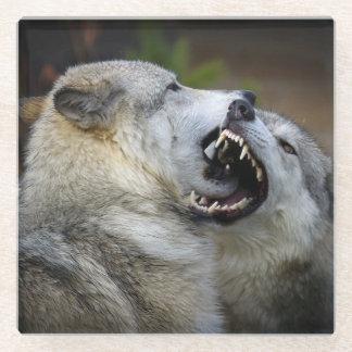 Wolf Fight Glass Coaster