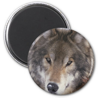 Wolf Gaze 2 Inch Round Magnet