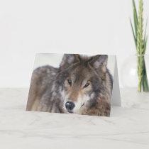Wolf Gaze Card