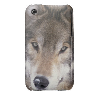 Wolf Gaze iPhone 3 Cover