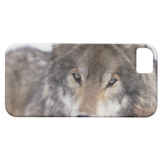 Wolf Gaze iPhone SE/5/5s Case