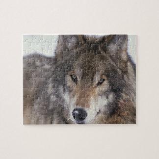 Wolf Gaze Jigsaw Puzzle