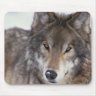 Wolf Gaze Mouse Pad