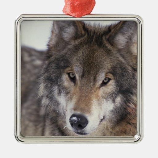 Wolf Gaze Square Metal Christmas Ornament