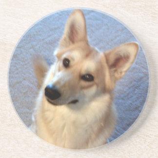 Wolf German Shepherd Mix Dog Puppy Coaster