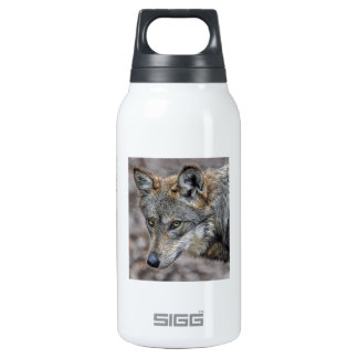 Wolf Glimpse Close Up Insulated Water Bottle