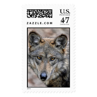 Wolf Glimpse Close Up Postage