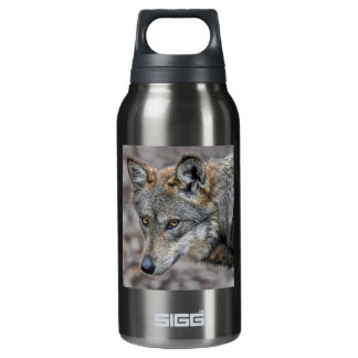 Wolf Glimpse Close Up SIGG Thermo 0.3L Insulated Bottle