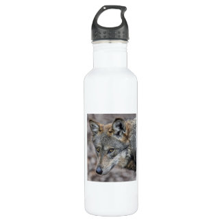 Wolf Glimpse Close Up Water Bottle