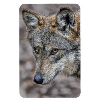 Wolf Glimpse Magnet