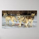 Wolf Guard Print