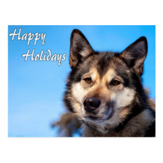 Wolf Happy Holidays.jpg Postcard