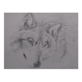 Wolf Head drawing by Lucinda Knowlton Postcard