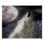 Wolf howl at night posters